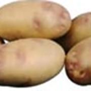 Картофель Пикассо фото