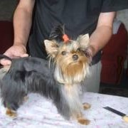Услуги грумера, парикмахера для животных. фото