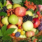 Обрезка плодовых деревьев Харьков и область фото