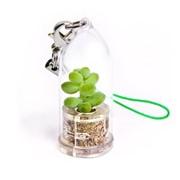 Буритто (ден. дерево) Minicactus брелок с живым растением фото