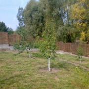 Ограды садовые из лозы фото