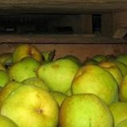 Хранение фруктов фото