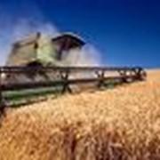 Культуры зерновые, Украина, Херсон фото