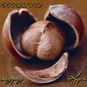 Саженцы фундука Трапезунд, Керасунд фото