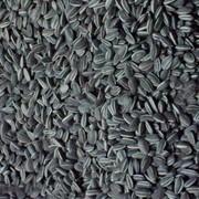 Семена гибридов подсолнечника фото