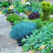 Устройство альпинариев, цветников. фото