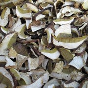 Белый гриб сушеный фото