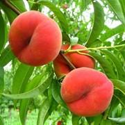 Персик с сада от производителя фото