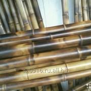 Бамбук стволы фото