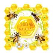 Пчелы живые для пчелоужаления (лечение укусами пчел) фото