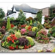 Озеленение сада, Херсон фото