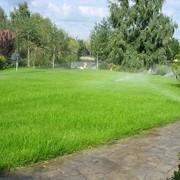 Подкормка газонов. фото