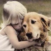 Коррекция поведения и перевоспитание собак фото