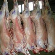 Мясо баранина фото
