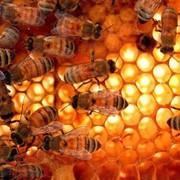 Мед натуральный купить оптом фото
