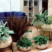 Озеленение домов и офисов с последующим сервисом фото