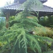 Рулонный и посевной газон, подготовка территории, разбивка элементов сада фото