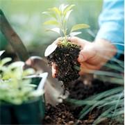 Посадка эксклюзивных растений фото