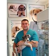 Ветеринарный врач ,выезд на дом фото