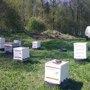 Пчелосемьи-2016 фото