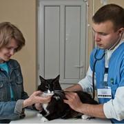 Услуги ветеринарные в Кишиневе фото