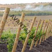 Шпалеры для винограда, Stîlpi pentru vie фото