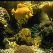 Поддержание биологического равновесия и чистоты в аквариуме фото