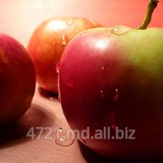 Яблоки голден в Молдове фото