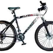 Велосипед горный Stinger Alpina R200 фото