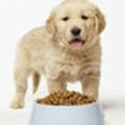 Собачий корм фото