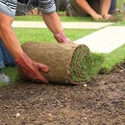 Укладка тротуарной плитки-Рулонный и посевной газон-Монтаж Автополива фото