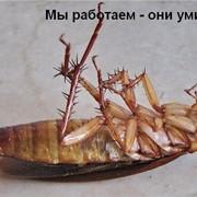 Дезинсекция в Алматы фото