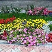 Создание цветников, Харьков фото