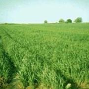 Сельскохозяйственное водоснабжение фото