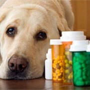 Лечение опухолевых заболеваний у животных фото