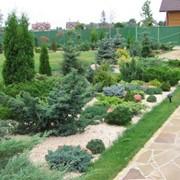Озеленение сада, ландшафтные проекты, Киев, Украина фото