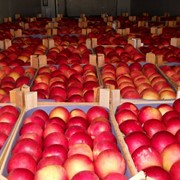 Яблоки сорта Айдаред фото