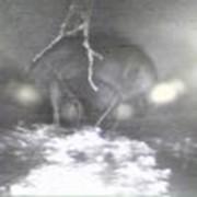 Обследование инженерных сетей с помощью видеодиагностики фото