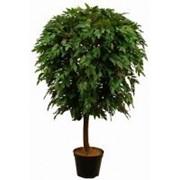 Искусственное дерево Фрутсия Вист (Код товара: 58094) фото
