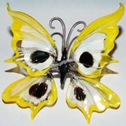 Бабочка красивая5 фото