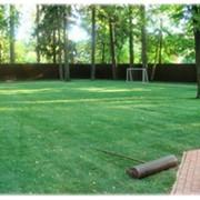 Спортивные газоны. фото