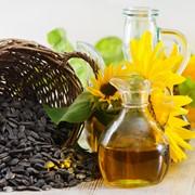 Закупка, Выращивание и переработка семян подсолнечника фото