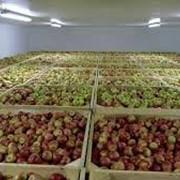 """Строительство фруктохранилища """"под ключ"""" фото"""