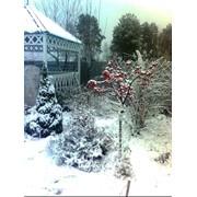 Сад зимой фото