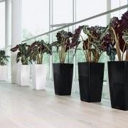 Уход за растениями фото