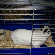 Гостиница для кроликов фото