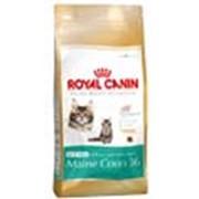 Корм для котов Royal Canin Kitten Maine Coon (для котят мейн кунов) 4 кг фото