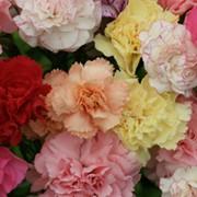 Цветочные семена фото