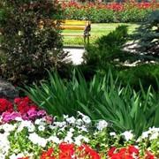 Устройство цветников и клумб №15 фото