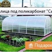 фото предложения ID 16324130